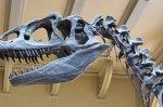 В Англии найден первый динозавр Юрского периода