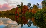 В Англии появится лес из клонированных деревьев