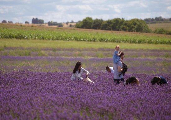 Названы самые счастливые города для жизни в Великобритании